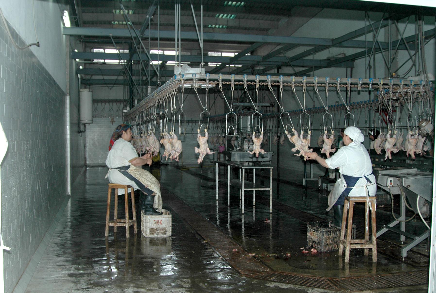 Stork stork Schlachthaus Gebrauchte Maschinen - Exapro
